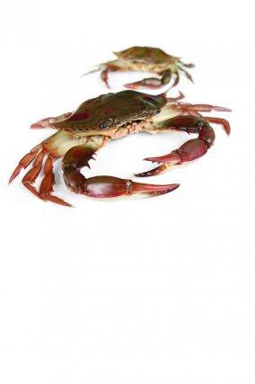 Chancre (Callinectes ornatus),se trouve plutôt dans les estuaires et en mer jusqu'à 60m de profondeur.