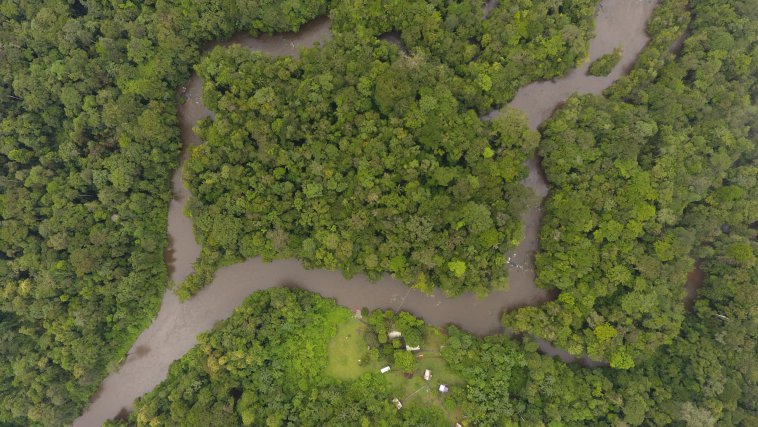 Vue aérienne de l'île, site d'étude de l'orientation d'Allobates femoralis, situé le long de la crique Arataï en face  du camp Pararé, au cœur de la réserve naturelle des Nouragues.
