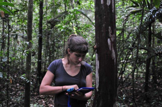 Sarah Chaloupka, une étudiante de l'Université de Vienne entre un point de capture sur sa tablette. Chaque arbre de l'île est cartographié, ce qui lui permet de rentrer précisément la localisation de la capture d'un individu. L'appareil photo étanche permet de prendre en photo les motifs ventraux uniques de chaque individu capturé pour les comparer après avec une base de données.