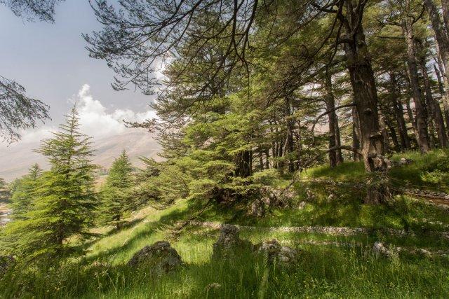 La réserve naturelle des Cèdres de Dieu.