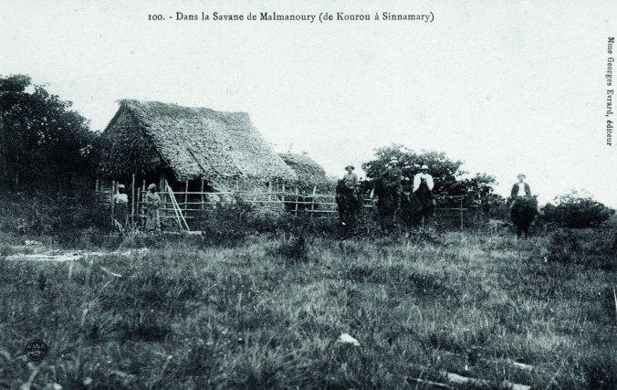 Dans la savane de Malmanoury (de Kourou à Sinnamary) : éditée vers 1906 (date de prise de vue inconnue)