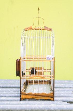 Une Pikolet dans sa cage fabriquée en Guyane, en moutouchi, dans l'attente de concourir lors d'une étape du championnat des Guyanes, place du marché, Sinnamary.
