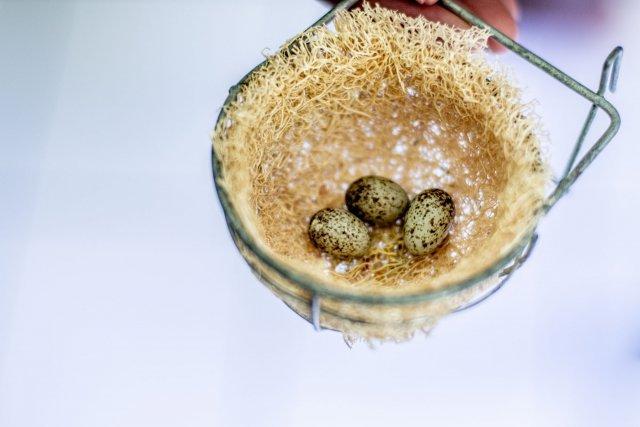 Un nid de pikolèt d'élevage. Les œufs donneront peut-être naissance à de futurs champions du chant.