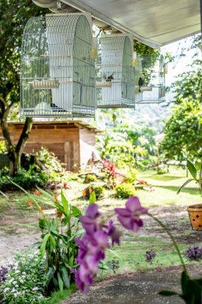 Les cages en enfilades sur la terrasse de la maison de Vinh Sao Lao.  Les oiseaux s'entendent mais ne peuvent se voir. En effet une plaque fixée sur le côté empêche tout contact visuel entre les oiseaux afin que ceux-ci ne se perturbent pas mutuellement. Celles-ci sont très fréquemment nettoyées et font l'objet d'un soin très particulier.