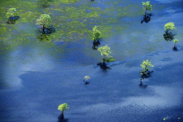 Forêt inondée dans les terres basses du Rio Araguari. Amapa. Brésil.