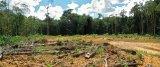 ►Paysage d'une mine alluvionnaire. Les trois photos ci-dessous montrent l'évolution d'un chantier alluvionnaire réhabilité. En un an , le corridor de plantation visible à partir de novembre 2008 en arrière plan s'est bien développé. Par ailleurs, la ré-utilisation des andains* de bois incite à la reprise de la végétation (visible au premier plan).  1.Novembre 2007 : avant plantations.