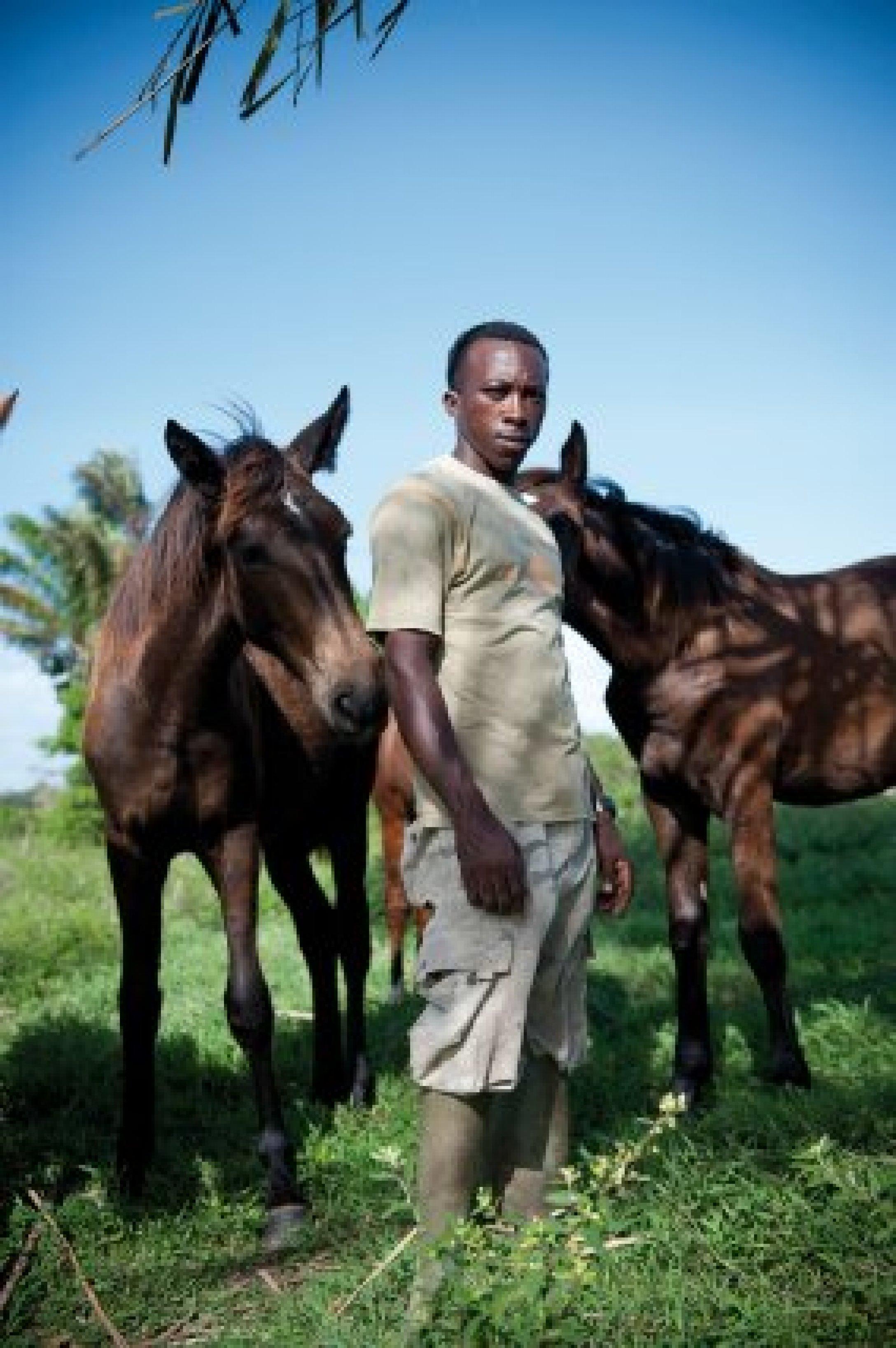 Guyane – ferme équestre «la Césarée».