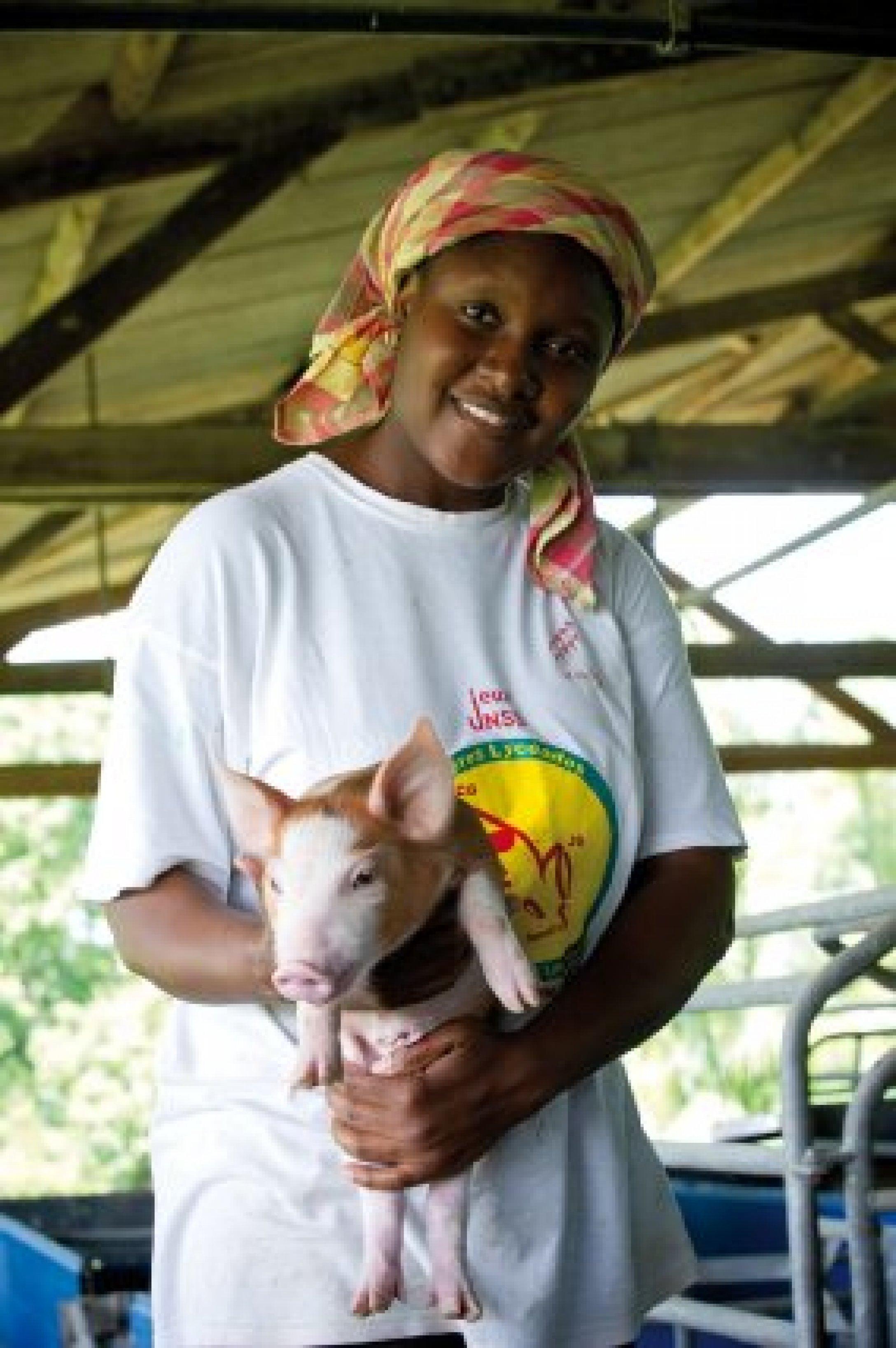 Guyane – élevage porcin de M. Ducat.