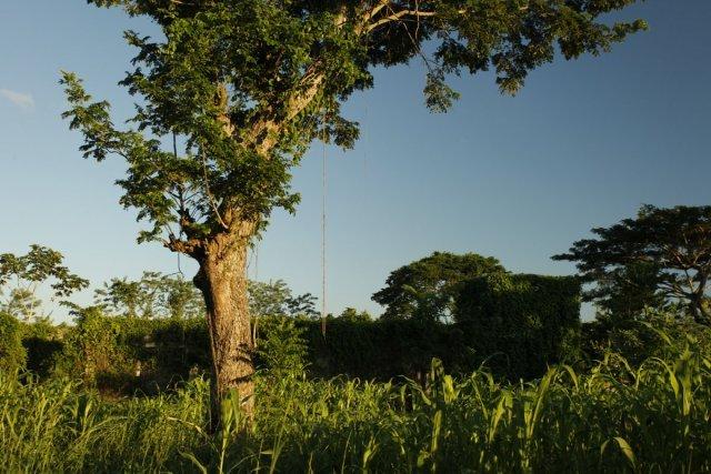 Les vestiges de l'usine de Vetiver de Lucien Ganot à Fond-des-Nègres