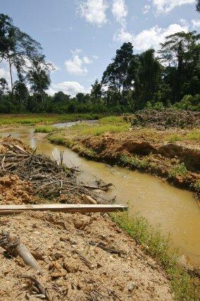 Crique après exploitation et réhabilitation dans la zone des Abattis Cotticas (2007)