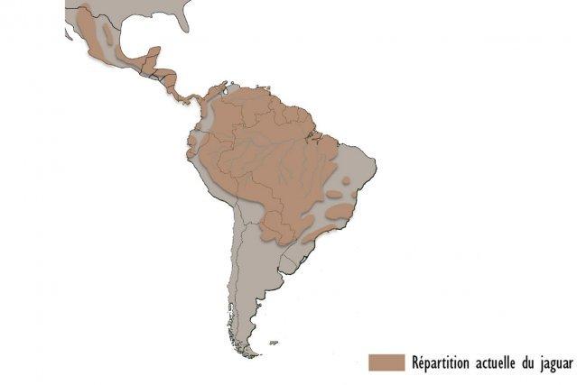 Nom latin : <i>Panthera onca</i> Ordre des Carnivores Famille des Félidés Français/anglais : Jaguar Wayapi : Yawapini Wayana : Istaino Sranan tongo : Istaino Créole : Tig  Poids : 50 à 150 kg Longueur :1,10 à 1,80 m  Statut UICN Espèce quasi menacée  Statut de protection en Guyane Interdit à la chasse (Quota 0)