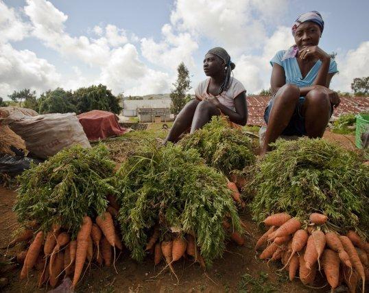 Les légumes sont vendus sur la marché de Seguin, ou prennent de chemin de la capitale.