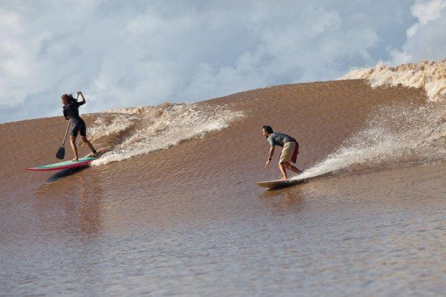 Deux surfeurs expérimentés, l'un sur un shortboard, l'autre sur un paddle et donc munie d'une rame, se lance sur la pororoca qui deferle dans l'Araguari ce matin.
