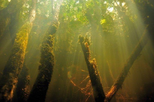 Paysage fantastique dans la forêt inondée de Moucous-Moucous