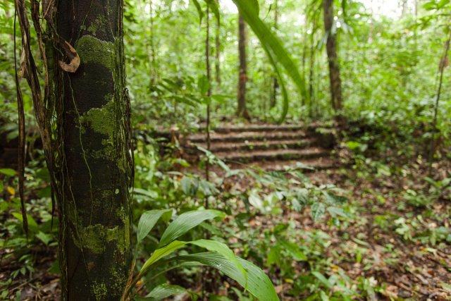 Escaliers de l'habitation La Reconnaissance (famille Martin)