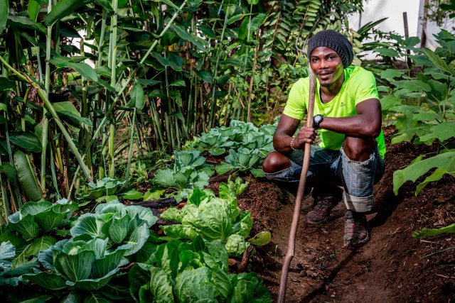 Lawa Penon. Sur son abattis, Lawa Penon fait pousser du manioc, des choux, des bananes, des racines (patates douces, dachines, ignames)… Ce jeune agriculteur, qui vend ses produits au bourg de Maripa-Soula, cherche à diversifier sa production, tout en respectant un mode de culture propre, naturel, sans utilisation de produits chimiques. Lawa propose également régulièrement des plats préparés uniquement avec des produits locaux et agro-transformés.