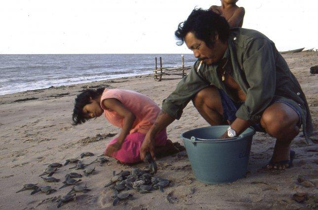 Daniel William, actuel chef coutumier de Yalimapo, a travaillé sur les tortues marines dès la fin des années1970.