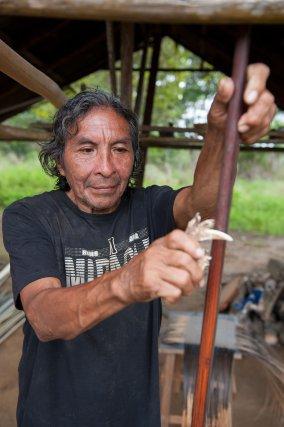 Renaud utilise une machoire de Pécari, ou Pakira qui signifie en améindien cochon-bois,  pour polir le bois d'arc.