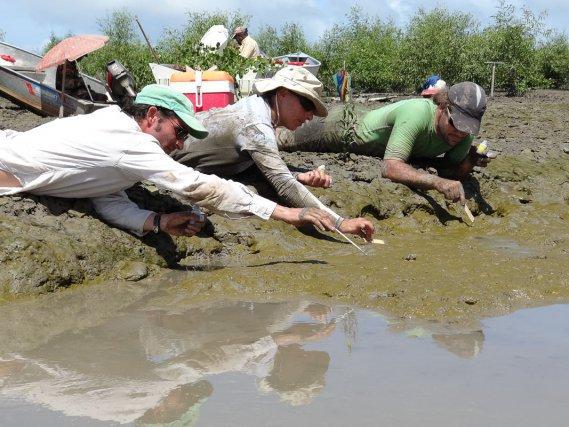 BIODIVERSITE A L'ETUDE : La moisson du biofilm, estuaire du Sinnamary