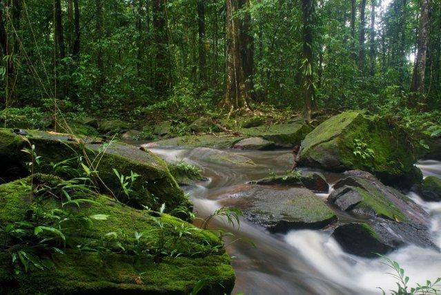 PAYSAGES GUYANAIS : Cascade dans une forêt sur les abords du lac de petit-saut