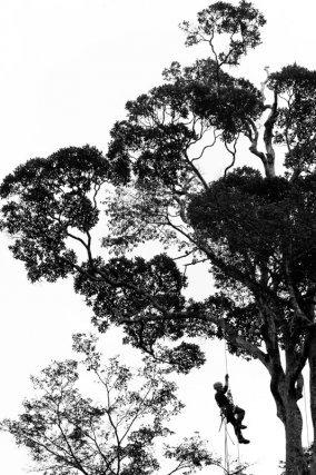 Coups de cœur : Biologiste montant dans un arbre pour récolter des feuilles et mieux comprendre la diversité des réponses physiologiques des arbres en fonction de l'environnement
