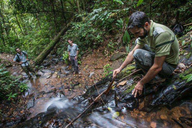 L'équipe de la réserve part à la recherche de pontes d'amphibiens dans le lit de la crique Mancellière.