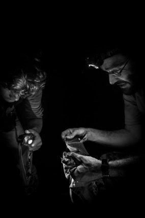 Suivi des chauves-souris de la réserve. Manipulation d'une espèce spécialisée dans la consommation d'amphibiens <i>(Trachops cirrhosus).</i>