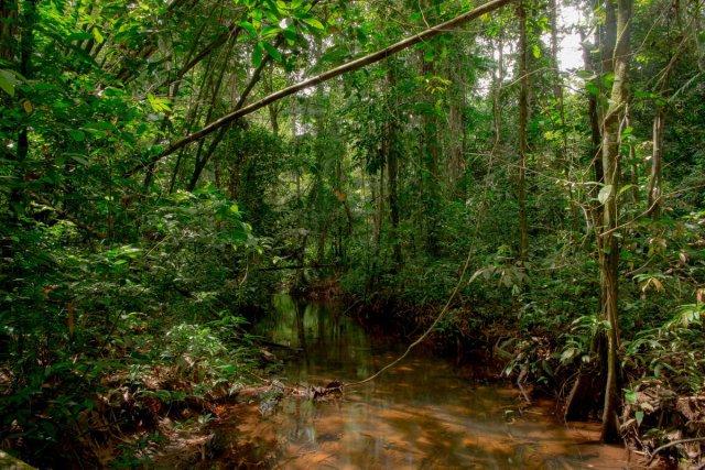 Crique forestière au coeur de la réserve naturelle.