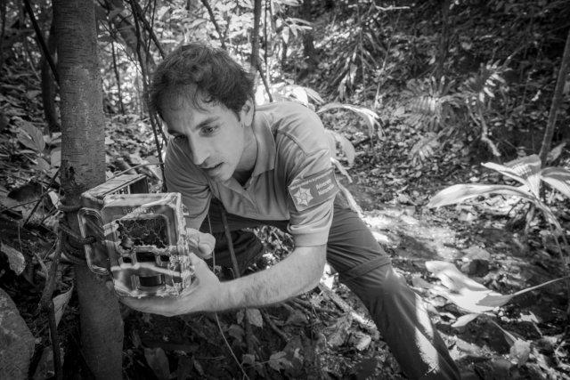 Installation d'un piège photographique par un garde de la réserve dans le cadre d'un inventaire de la grande faune.