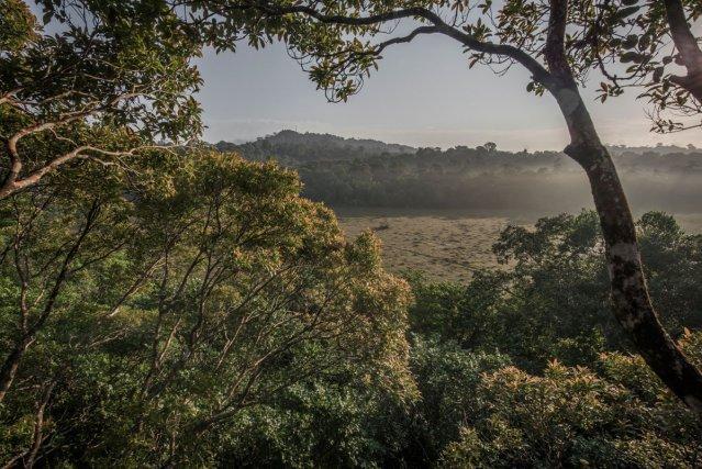 Cette prise de vue a été réalisée depuis un arbre émergent en lisière de savane. Le Mont Grand Matoury domine à l'arrière-plan.