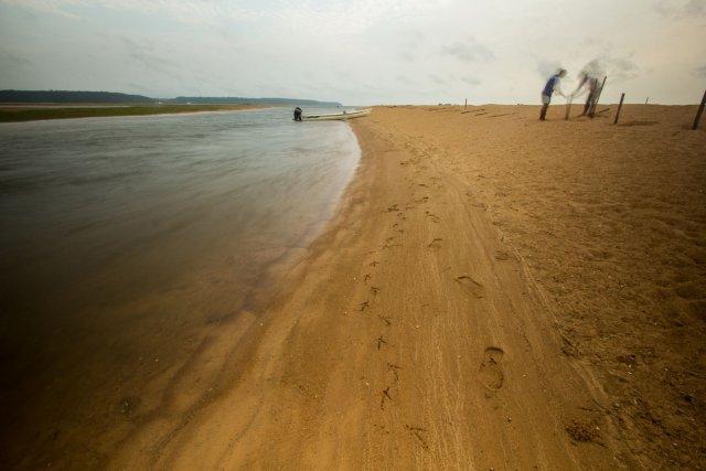 Mise en place d'une clôture sur la plage pour un meilleur recensement des jeunes tortues