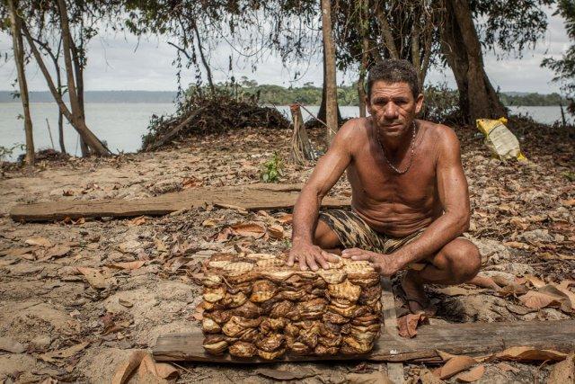 Raimundo vit, entre autres, de la récolte du latex des hévéas