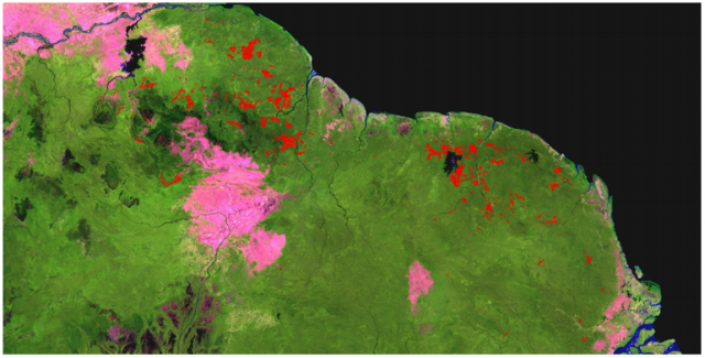 Entre 2001 et 2013, 41% de la déforestation amazonienne :liée à l'orpaillage s'est déroulée dans les Guyanes.