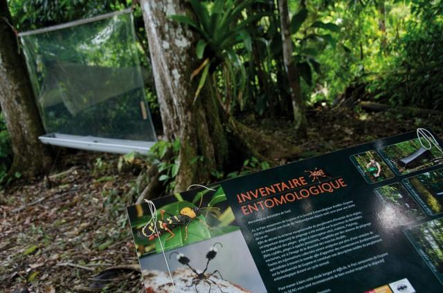 Saül : un recensement entomologique de longue haleine