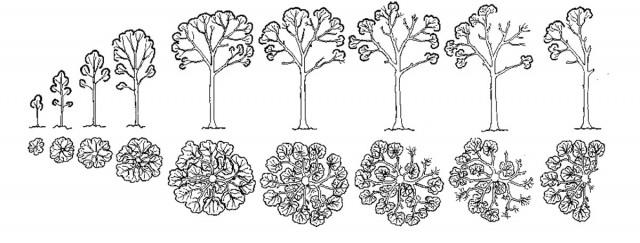 ECOLOGIE Architecture de l'arbre