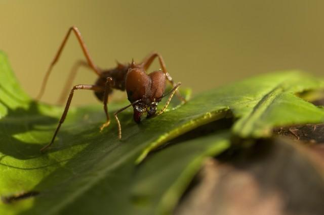 Des fourmis en plastique