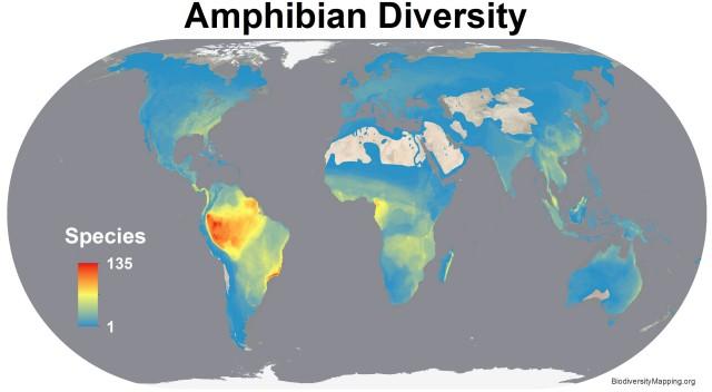 Carte de la diversité des amphibiens. Source Union Internationale pour la Conservation de la Nature.