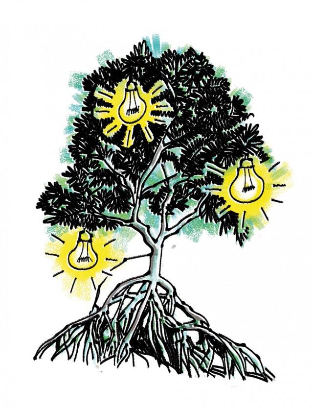 De la lumière  grâce à la mangrove