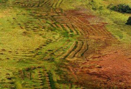 Un complexe de champs surélevés précolombiens dans une savane côtière de la Guyane française. Aujourd'hui, ces savanes brûlent presque tous les ans durant la saison sèche© Stéphen Rostain