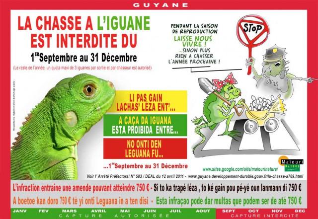 Fermeture de la chasse à l'iguane: du 1er septembre au 31 décembre