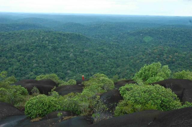 CNRS Guyane : Les scientifiques partent inventorier les arbres de la forêt guyanaise