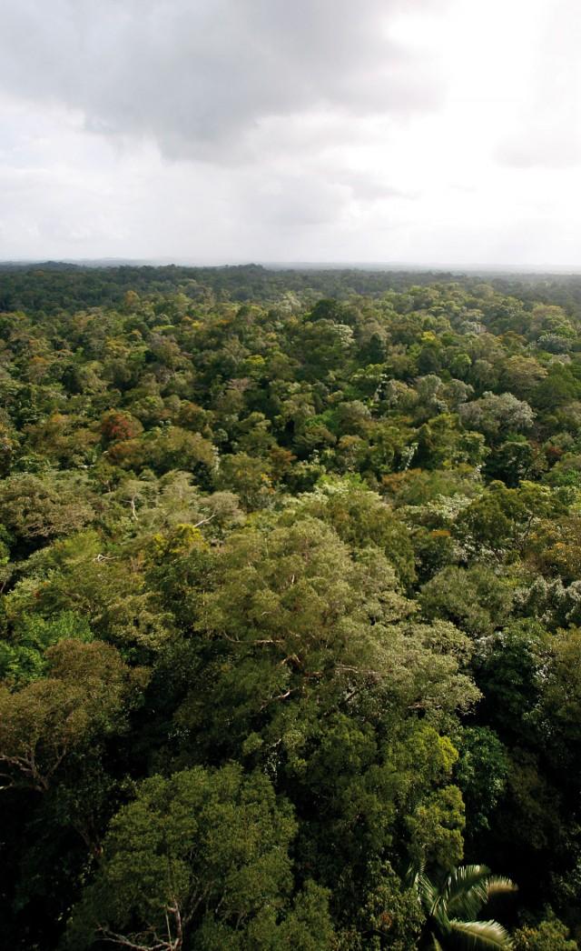 ECOLOGIE : A la recherche des origines de la forêt guyanaise.