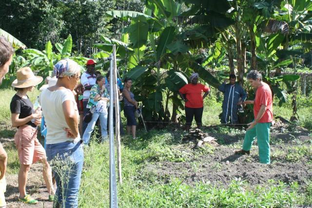 Agriculture : Écho de la formation au bois raméal fragmenté organisée par Biosavane