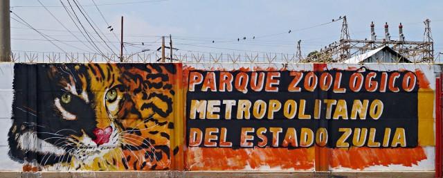 Vénézuéla: Les animaux sauvages victimes collatérales de la crise