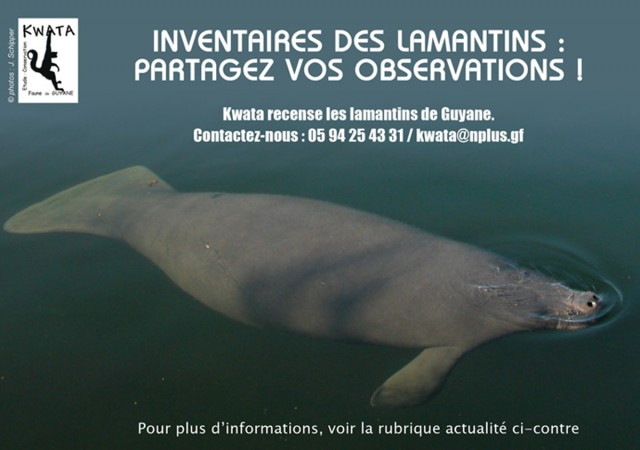 FAUNE : Kwata prépare un recensement des lamantins