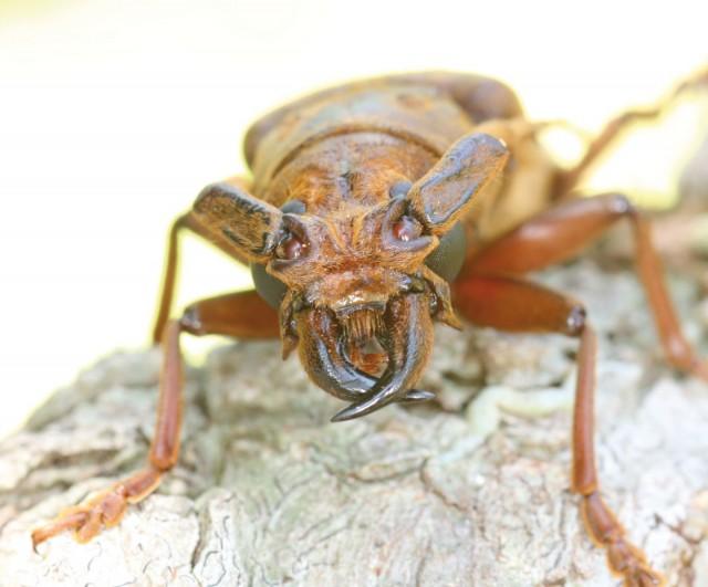 Insectes : Coléo-news