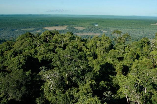 DISTINCTION : La réserve du Mont Grand Matoury, lauréate du prix national 2010 Jean Roland.