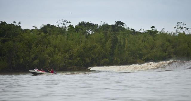 Élevage et barrages tuent :le fleuve Araguari