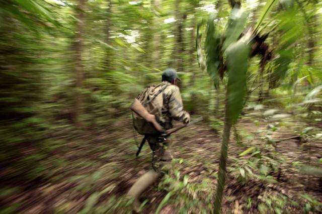 La chasse menace aussi les arbres