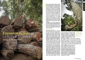 Economie du bois : La forêt à la croisée des chemins